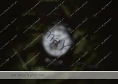 Holzkern Watches [Manhattan]